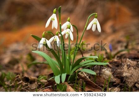kert · virágok · virág · tavasz · idő - stock fotó © mady70