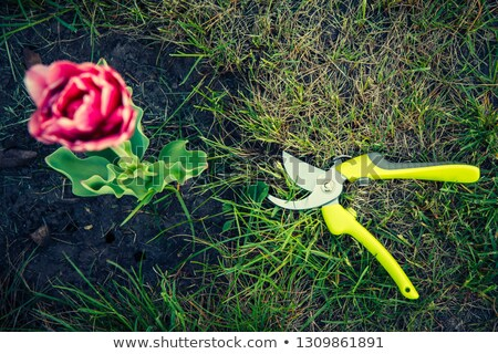 Red garden pruner. Stock photo © RAStudio