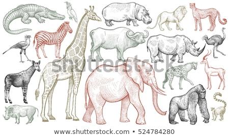 vektor · zsiráf · orrszarvú · elefánt · Afrika · fa - stock fotó © derocz