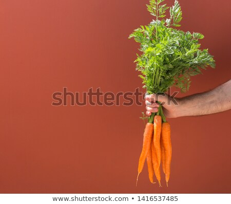 male hands holding bunches of raw carrots stock photo © ozgur