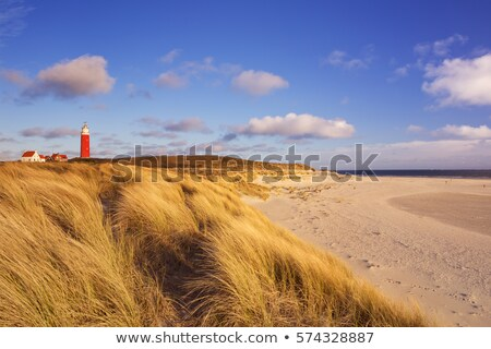 Stockfoto: Holland · zand · nederlands · kust · gras · zon
