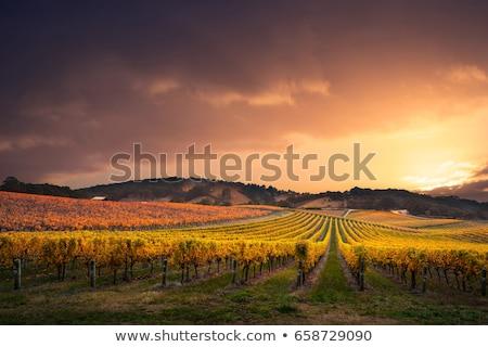Bağ gün batımı ışık tepeler geri yatay Stok fotoğraf © Koufax73
