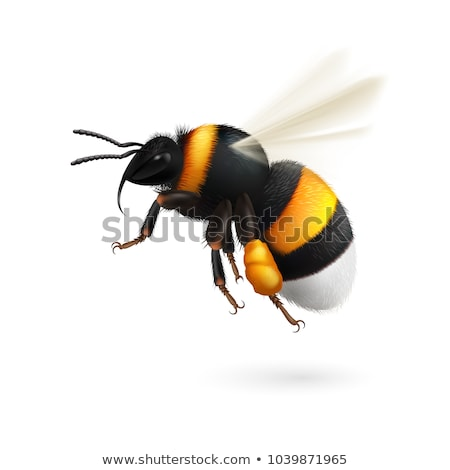 Stock photo: Bees flying in the garden on earth
