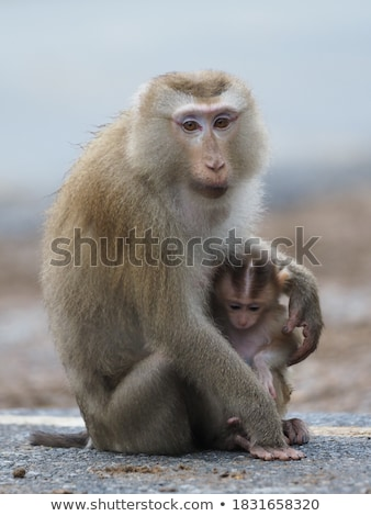 baby baboon relaxing in the tree stock photo © simoneeman