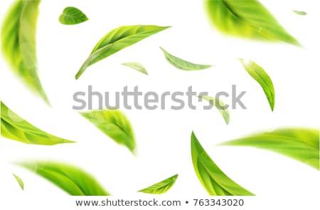 Hot Ice Tea stock photo © Joseph Cortes (Joseph) (#805575