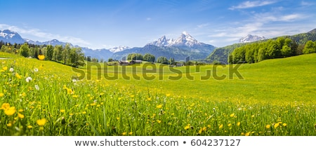 spring landscape with pasture on a green meadow in the mountains stock photo © kotenko