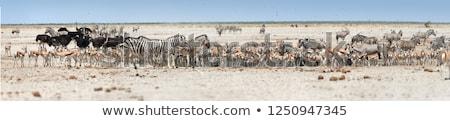 Savane parc eau désert animaux Photo stock © meinzahn