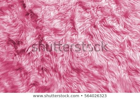 pink shaggy skin of an animal closeup texture, Fur Texture Stock photo © ivo_13