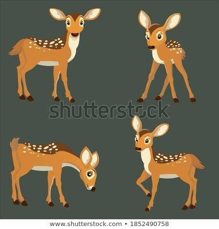 Ayarlamak geyik pozisyon örnek dizayn sanat Stok fotoğraf © bluering