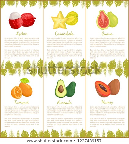 Mamey Exotic Juicy Fruit Vector Poster Text Leaves Stock photo © robuart
