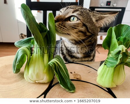 bengal cat on white kitchen table with the plant stock photo © dashapetrenko
