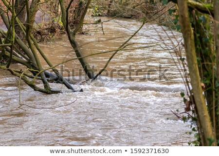 水中 森林 嵐 シーン 実例 雲 ストックフォト © bluering