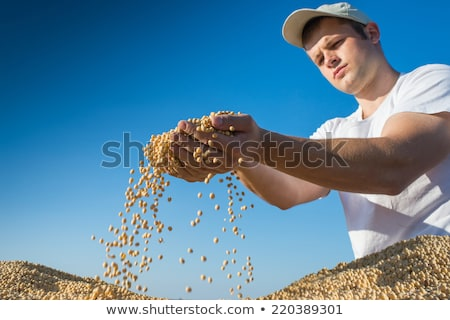 Mezőgazdasági jelenet gazda szójabab mező női Stock fotó © simazoran