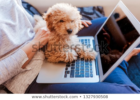 Gelukkig meisje hond sofa meisje liefde kind Stockfoto © Lopolo