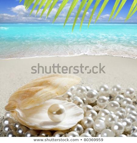 plaży · biały · piasek · perła · powłoki · makro - zdjęcia stock © lunamarina
