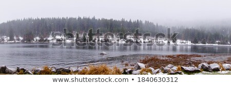 Stock photo: Schluchsee holiday scenery