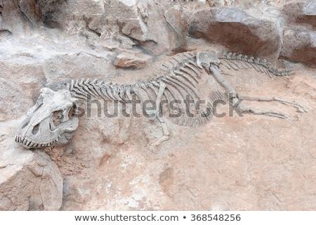 Dinosaur fossil Stock photo © njnightsky