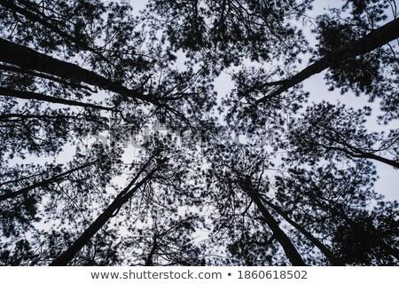 Tree and Foggy Surface Stock photo © azamshah72