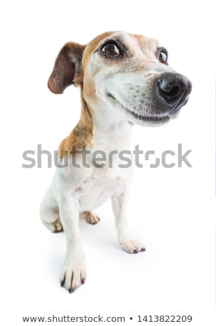 Smiling cutie. Stock photo © lithian