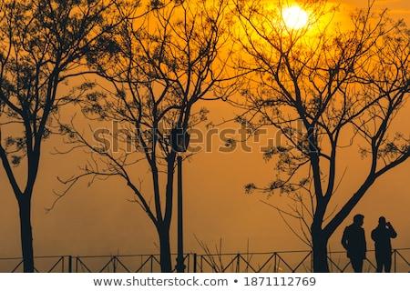 caminata · bosques · jóvenes · madre · nino · caminando - foto stock © scheriton
