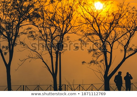 Nachmittag Winter Fuß Sonnenuntergang Silhouette Wasser Stock foto © scheriton