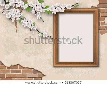 fa · növekvő · antik · fal · ház · tavasz - stock fotó © cherju