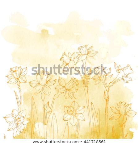 Abstract narcis Geel groene bloemen gras Stockfoto © Melpomene
