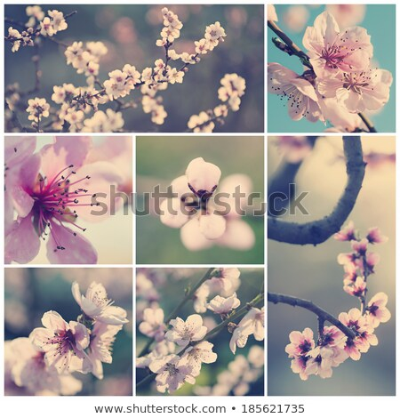 springtime collage of beautiful flowers stock photo © julietphotography