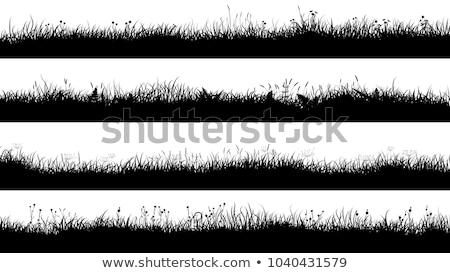 草原 · シルエット · ベクトル · 草 · オブジェクト - ストックフォト © angelp