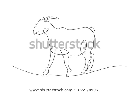 Single goat in pen Stock photo © bobkeenan