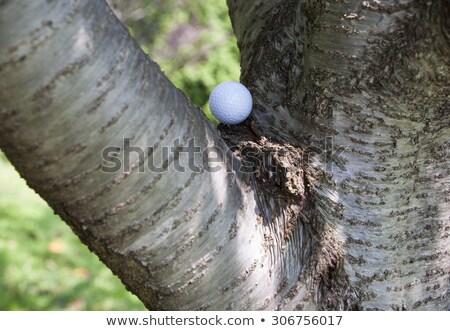 funny · árboles · problema · vector · Cartoon · grupo - foto stock © pcanzo