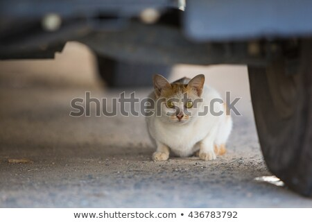 small cat or kitten hiding under front of car stock photo © backyardproductions