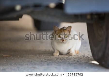 korkmuş · kedi · yavrusu · stüdyo · fotoğrafçılık · korkmuş · yalıtılmış - stok fotoğraf © backyardproductions