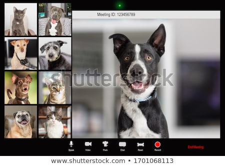 Dog's meeting Stock photo © Rybakov