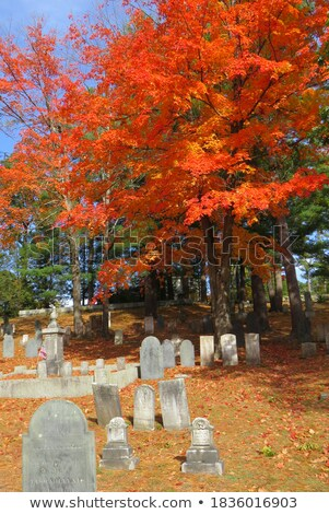Cemetery in autumn. Stock photo © FER737NG