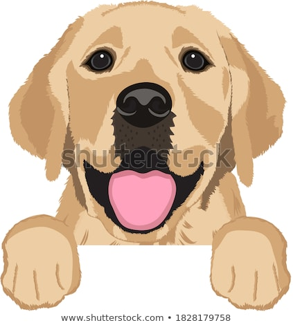 golden labrador retriever dog head  Stock photo © patrimonio