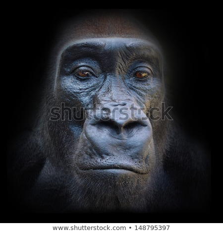 Gorila mono retrato humanos Foto stock © lunamarina