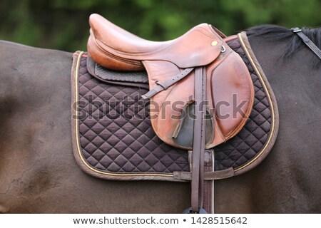 Caballo silla de montar manta marrón caballo blanco Foto stock © rhamm