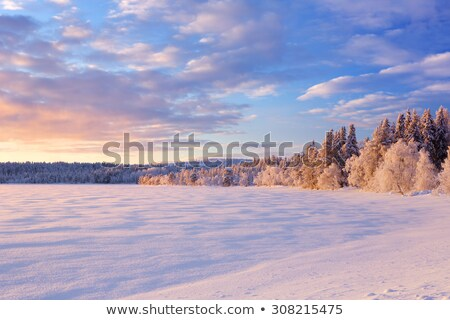 alan · ağaçlar · kar · mavi · mavi · gökyüzü · gökyüzü - stok fotoğraf © juhku