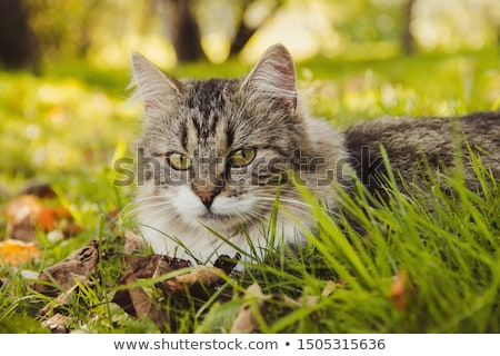 cute cat lying in the grass of the garden stock photo © meinzahn