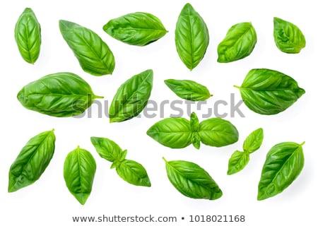 Green basil isolated on white stock photo © entazist