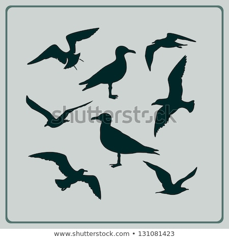 Seagull profile Stock photo © tilo