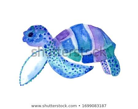 декоративный Черепахи воды декоративный дизайна искусства Сток-фото © ulyankin