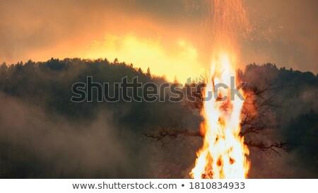 горные соснового лес wildfire разрушенный форт Сток-фото © PixelsAway