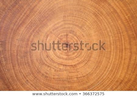 Vecchio intemperie legno anello texture cross Foto d'archivio © skylight