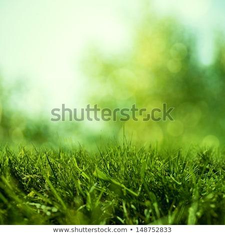 Yeşil bereketli çim doku doğa çevre Stok fotoğraf © stokkete