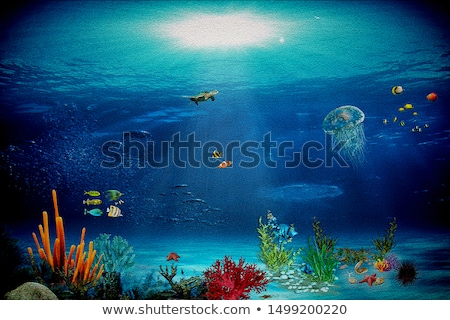 the little mermaid stock photo © prill