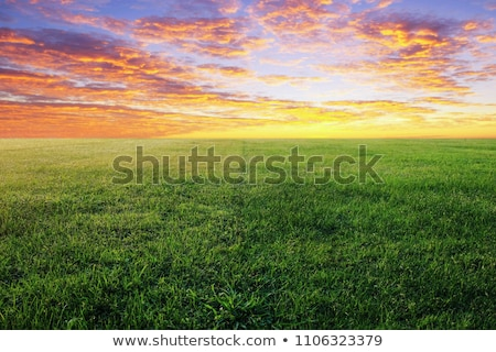 Vibrant grassland at sunrise Stock photo © Juhku
