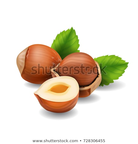 Hazelnuts on white background. Vector illustration Stock photo © ConceptCafe