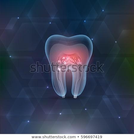 Zębów przekrój streszczenie niebieski projektu jasne Zdjęcia stock © Tefi